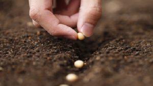 plantio-de-sementes-5
